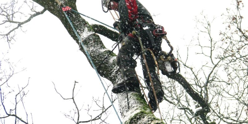 Cutting the tree in the cold