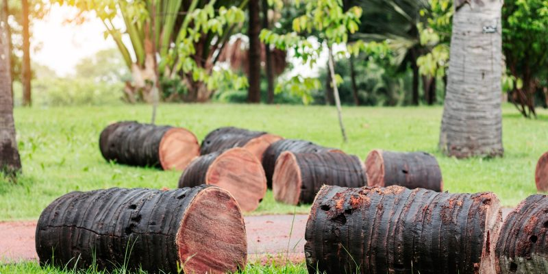 Kingston - trees are cut on lawns