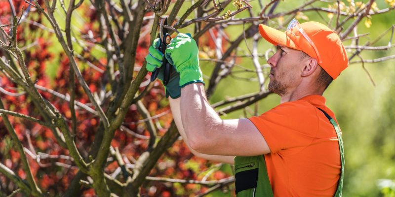 Cartersville - Removing Tree Branches