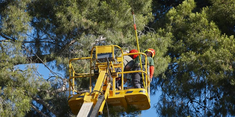 Centre, Alabama - Tree work, pruning operations. Crane and pine wood forest